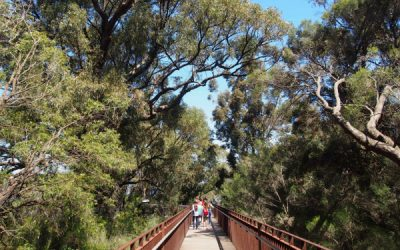 Kings Park Tree Top Walk